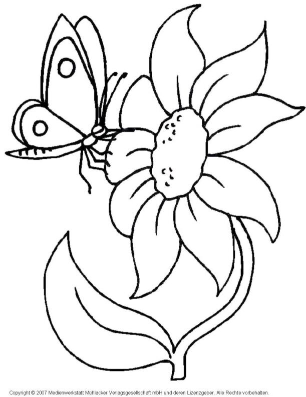 Schmetterlinge ausmalen