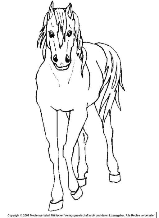 Pferd 3 MedienwerkstattWissen