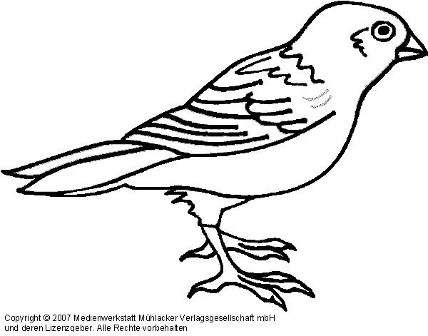 Niedlich Vorlage Für Vogel Fotos - Beispiel Wiederaufnahme Vorlagen ...
