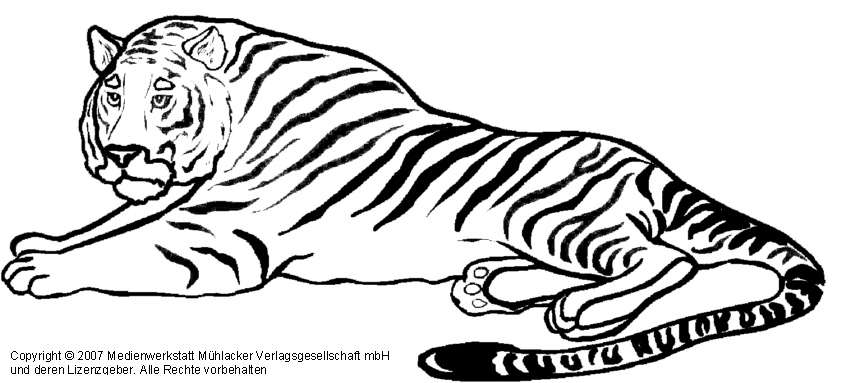 Coloring Pages Baby Tigers
