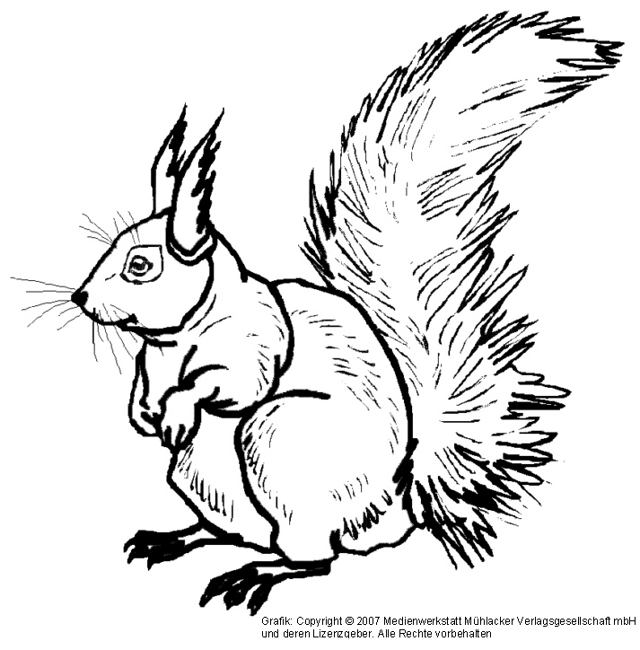 eichhörnchen 2  medienwerkstattwissen © 20062021