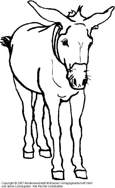 Esel - Medienwerkstatt-Wissen © 2006-2017 Medienwerkstatt