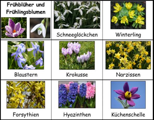 Blumen kennenlernen kindergarten