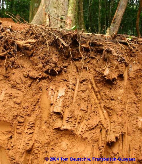 Kosystem regenwald humus medienwerkstatt wissen 2006 for Boden im regenwald