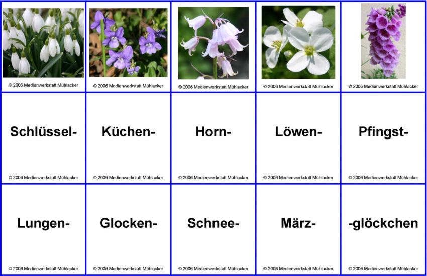 Blumenarten Az Mit Bild Leporello Blumen Und Pflanzen A Bis Z