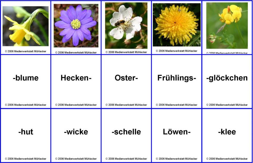 Blumennamen zusammensetzen - Teil 1 - Medienwerkstatt