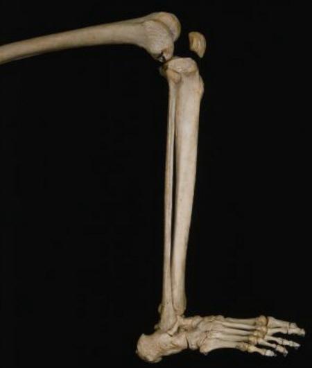 Was Ist Der Kleinste Knochen Im Körper