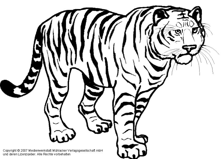 tiger 1  medienwerkstattwissen © 20062021 medienwerkstatt