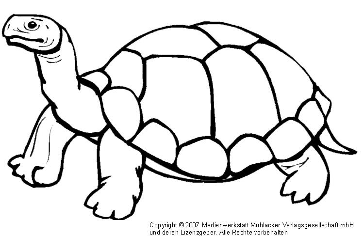 schildkröte  medienwerkstattwissen © 20062017