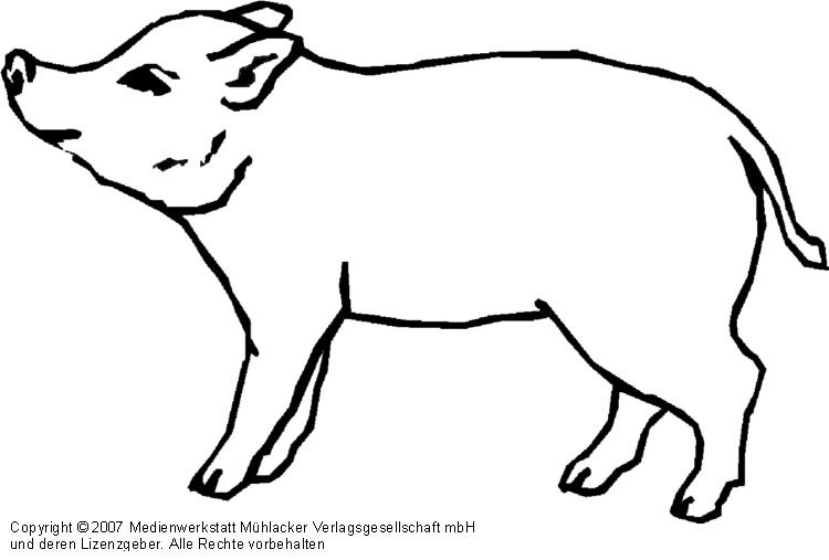 Schwein Medienwerkstatt Wissen