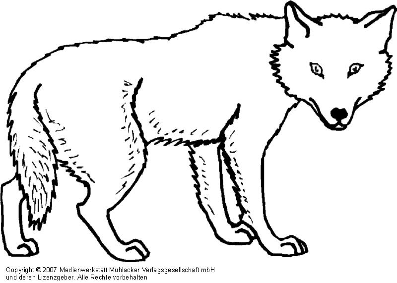 Wolf 1 medienwerkstatt wissen 2006 2017 medienwerkstatt for Disegni di lupi facili