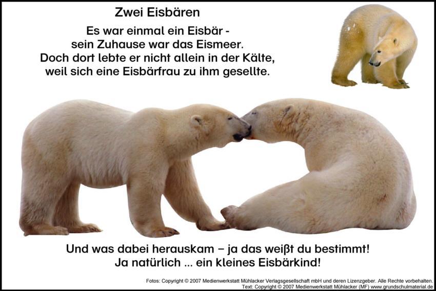 Eisbär 2 Medienwerkstatt Wissen © 2006 2017 Medienwerkstatt