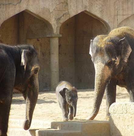 Haben Alle Elefanten Stoßzähne