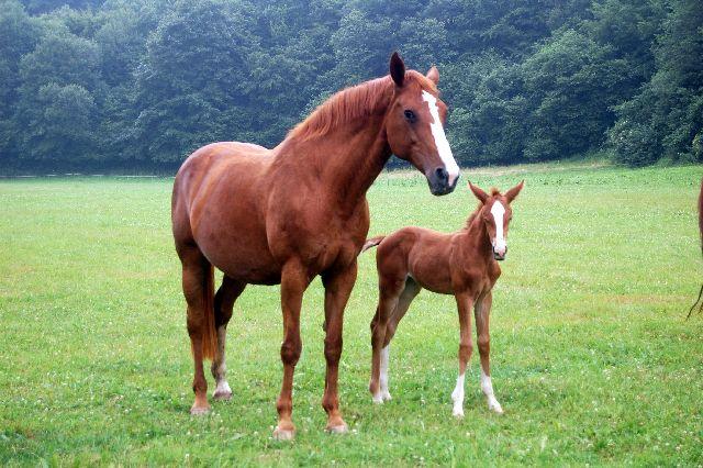 pferdefamilie  befö kurs website