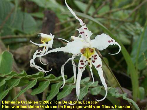 pflanzen in tropischen regenw ldern orchideen medienwerkstatt wissen 2006 2017 medienwerkstatt. Black Bedroom Furniture Sets. Home Design Ideas
